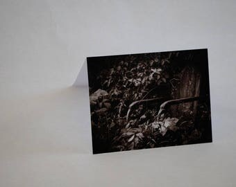 Blank note cards, chair, photo cards, set of 5,