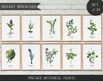 Vintage Botanical Illustrations, Set of 10 prints, Instant download Digital prints, vintage illustrations, botanical illustrations,