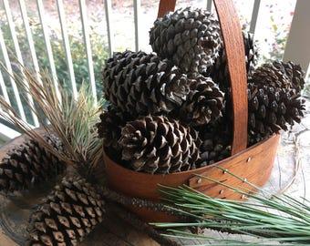 """Georiga Loblolly Pine Cones (25 pine cones 1"""" to 3"""" long)"""