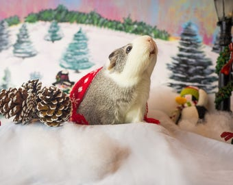 Guinea Pig in a Winter Wonderland Holiday Greeting Card
