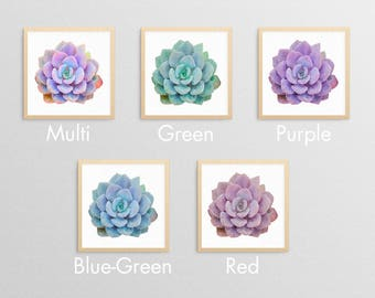 Succulent - Nature Decor- Nature Gifts- Natural Gifts- Prints for Decor- Nature Art- Succulent Art -Boho -Eclectic -Greenery -Southwest