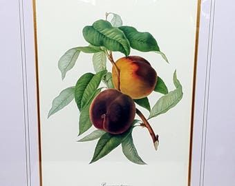 "25"" LARGE BOTANICAL FRAMED Fruit Botanical Print Vintage Peach Botanical Redoute Style Print French Farmhouse Decor Pickup Kansas City Also"