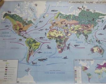 Cat world map print  Etsy