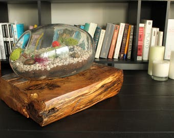 Glass terrarium with natural aged wood base