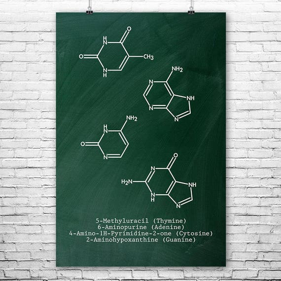 Dna molecules thymine adenine cytosine guanine poster science te gusta este artculo malvernweather Gallery