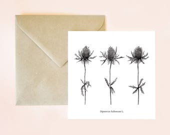 Botanical card, floral card, botanical postcard, plant drawing, botanical print, card, envelope card, floral print, botanical drawing