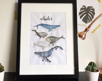 Watercolor whale species