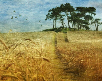 Scottish landscape, tree copse, fields of barley, photo edit, flock of crows, original landscape, surreal photography, photo art, surreal,