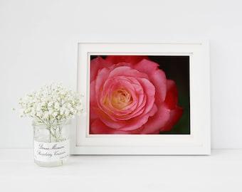 Pink Rose Photography Print Rose Print Floral Photography Floral Print Photography Gifts Nature Prints Nature Photograph Botanical Photo