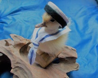Hello Sailor Ducky! Taxidermy Nautical Duckling.