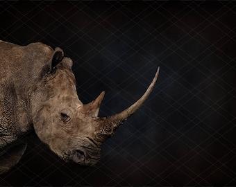 Rhinoceros digital background for newborn photography, Rhino photography background