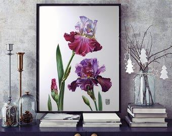 Bearded Iris, Botanical watercolour, Wall Art, Purple Flower, Room Decor, Iris Watercolor, Garden Flowers Decoration