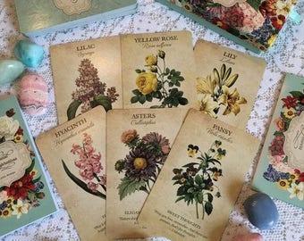 Botanical Herbal Tarot Divination Reading