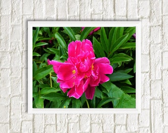 Wild rose photo | Flower poster | Pink flower picture | Digital download | Printable art | Rosa rugosa | Japanese rose | Nature photography