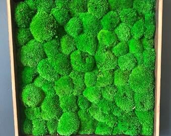 Preserved Moss Wall Garden