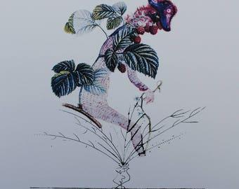 Salvador DALI - raspberry Constable - Printographie 800ex