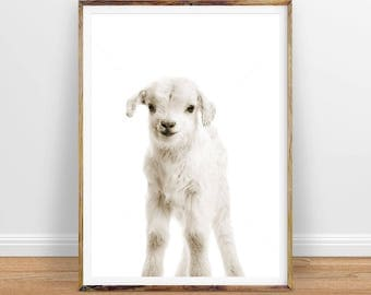 Lamb Digital Print, Baby Lamb Wall Art, Nursery Art Decor, Printable Art, Instant Digital Download Art, Instant Download, Printable Poster