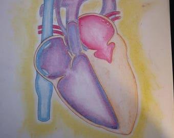 Hlhs Heart