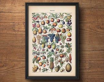 Fruit print, Fruit illustration, Botanical print, Botanical fruit, Botanical illustration, Vintage Botanical art, Kitchen art, Wall art