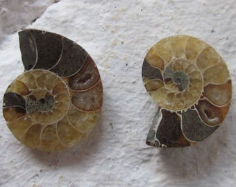 Ammonite. 2 Pcs. S0570