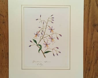Original 1852 botanical painting