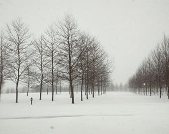 Winter Hush4x6, 5x7, 8x10, Maryland, photography, winter storm art, home decor, snow photography, tree silhouettes