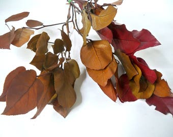 Preserved Salal/lemon leaves bunch, fall decor, preserved leaf for craft,bouquet of  leaves