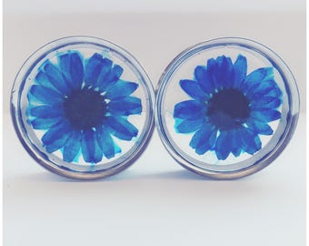 Vibrant blue daisy plugs, ear guages, ear stretchers, ear plugs.