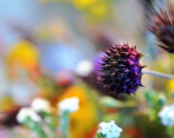 Wild Flower photogrpahy, digital download, printable photo, nettle photo, wall art, wildflowers, wildflower photo, botanical photo