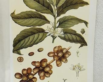 Vintage Botanical Encyclopedia Page Print