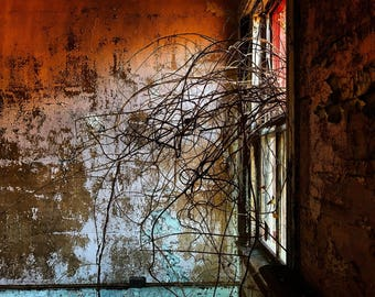 State hospital for the insane, winter vines