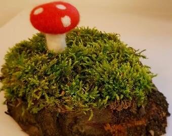 Mushroom of carded wool