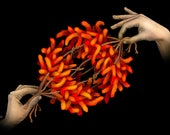 Chromosome Segregation - Science Art Print (Molecular Biology, Genetics, Cells, Mitosis, Anaphase, DNA, STEM, Teacher Gift, Giclee, PhD)