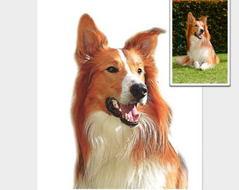 Custom Pet Portrait, Original digital photo processing.