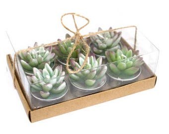 Plant Candles set of 6