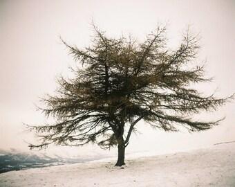 Lone tree, Dennis Knowle