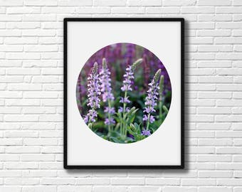Lavender wildflowers, original photo.