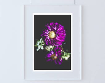 """Dark botanical photography print floral pink black wall art """"Dahlia"""" — available in 5x7 - 8x10 - 11x14"""