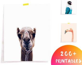 Animal Print, Nursery Wall Art, Safari Animal Print, Safari Decor, Printable Art, Downloadable Animal Art, Camel Print, Nursery Art