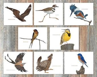 Notecards --Birds of the Flint Hills