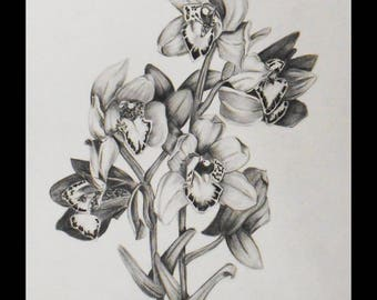 Graphite drawing of a cluster of Orchid