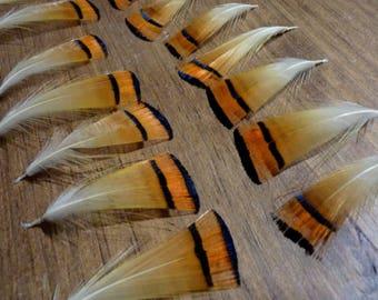 x 6 * perfect * wonderful Golden pheasant feathers
