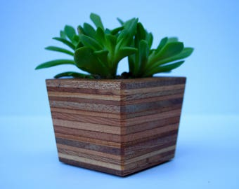Succulent and Cactus Planter - Small