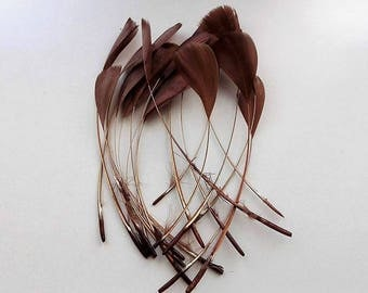 set of 10 feathers Brown 15cm