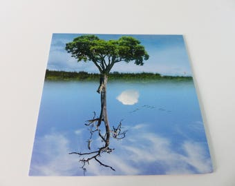 tree reflection being square card and have been