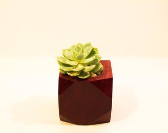 Purpleheart wood Succulent Planter  -  Geometric Collection