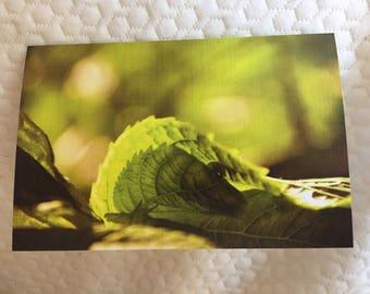 4x6 GREETING CARD - Sun on leaf, NYC