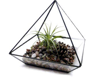 Glass Prism Black Lined Terrarium