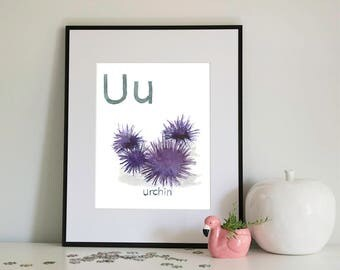 U is for Urchin, alphabet series - Print of Original Watercolour