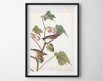 Audubon Bird Print, PRINTABLE ART, Wall Decor, Botanical Print, Bird art, Vintage Print, Poster, Nature print, Warbler, Flower Art